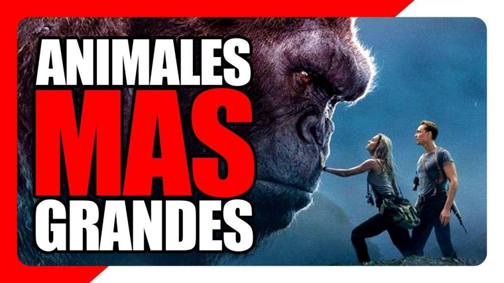 Los animales mas grandes